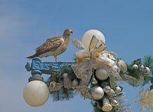 Pássaro de adeus do Natal Fotos de Stock Royalty Free