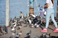 Pássaro de alimentação na parte dianteira do rio do templo de Nonthaburi Fotografia de Stock Royalty Free