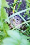 Pássaro de bebê Imagens de Stock