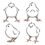 Pássaro de bebê de quatro ângulos Imagens de Stock Royalty Free