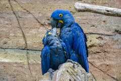 Pássaro de Caretaking Imagem de Stock Royalty Free