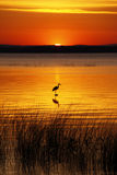 Pássaro de Champlain do lago e nascer do sol dourado Foto de Stock Royalty Free