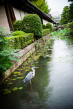 Pássaro de espera na água Foto de Stock Royalty Free