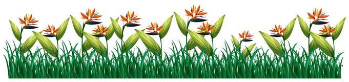 Pássaro de flores de paraíso no arbusto ilustração do vetor