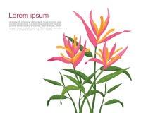 Pássaro de flores de paraíso (rosa) Foto de Stock Royalty Free