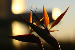 Pássaro de flores de paraíso Imagem de Stock Royalty Free