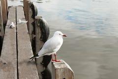 Pássaro de mar Fotos de Stock