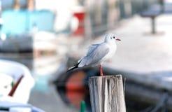 Pássaro de mar que está em um polo do suporte do navio Imagem de Stock