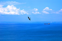 Pássaro de mar sobre o oceano fotografia de stock royalty free