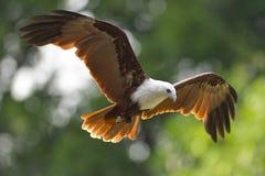 Pássaro de rapina imagens de stock royalty free