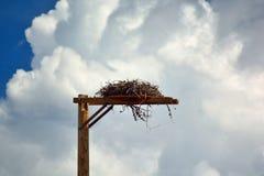 Pássaro de rapina Hawk& x27; s Falcon& x27; o homem erigido s fez o ninho em um Polo Imagens de Stock