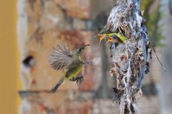 Pássaro de Sun Fotografia de Stock