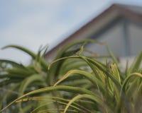 Pássaro de Sun da malaquite na planta do aloés fotos de stock