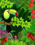 Pássaro de Toucan Fotografia de Stock