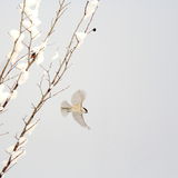 Pássaro de vôo Fotografia de Stock Royalty Free