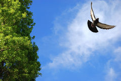 Pássaro de vôo no céu Fotos de Stock Royalty Free