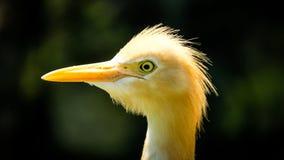 Pássaro de vista engraçado do yello imagens de stock