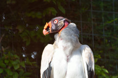 Pássaro de vista estranho Fotografia de Stock Royalty Free