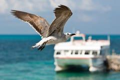 Pássaro de voo Fotos de Stock