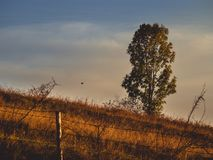 Pássaro de voo no por do sol Foto de Stock Royalty Free