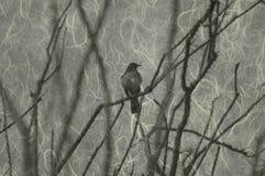 Pássaro de zombaria no Ocotillo (V1) ilustração royalty free
