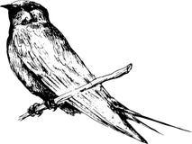 Pássaro desenhado mão Fotografia de Stock Royalty Free