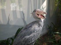 Pássaro-dinossauro Imagem de Stock