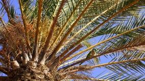 Pássaro do achado em uma coroa da palma Imagem de Stock