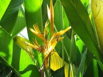 Pássaro do amarelo da flor da flor de paraíso Fotografia de Stock Royalty Free