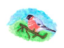 Pássaro do dom-fafe no ramo de pinheiro imagens de stock royalty free