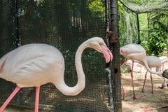 Pássaro do flamingo no jardim zoológico Foto de Stock