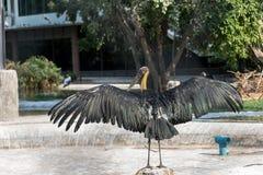 Pássaro do Grande-coração Fotos de Stock Royalty Free
