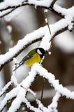 Pássaro do inverno Imagens de Stock
