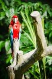 Pássaro do Macaw foto de stock royalty free