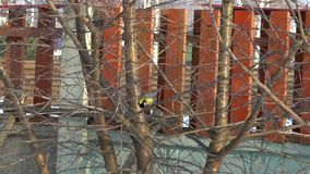 Pássaro do melharuco na árvore filme
