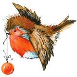 Pássaro do Natal e fundo do Natal Ilustração da aguarela Fotos de Stock Royalty Free