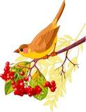 Pássaro do outono imagens de stock