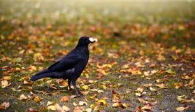 Pássaro do outono Imagem de Stock