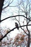 Pássaro do outono no ramo leafless imagem de stock