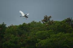 Pássaro do pantanal no habitat da natureza Fotos de Stock