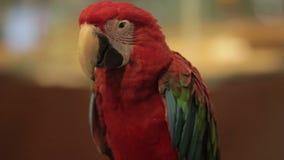 pássaro do papagaio filme