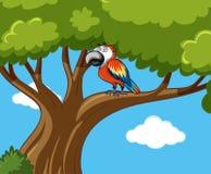 Pássaro do papagaio no ramo Imagens de Stock Royalty Free