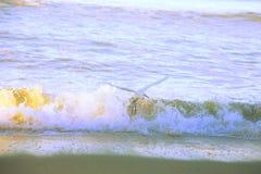 Pássaro do pelicano branco Imagem de Stock