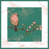 Pássaro do pisco de peito vermelho no ramo da cereja Ilustração do vetor Fotografia de Stock
