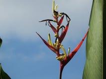 Pássaro do vermelho da flor da flor de paraíso Fotografia de Stock Royalty Free