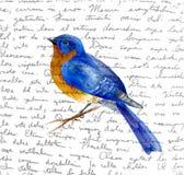 Pássaro do vetor da mola ilustração stock