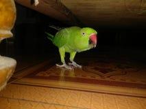 Pássaro doce imagem de stock