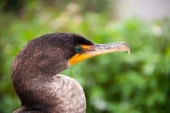 Pássaro dos marismas Fotografia de Stock Royalty Free