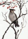 Pássaro e baga Fotografia de Stock Royalty Free