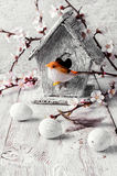 Pássaro e birdhouse Fotografia de Stock Royalty Free